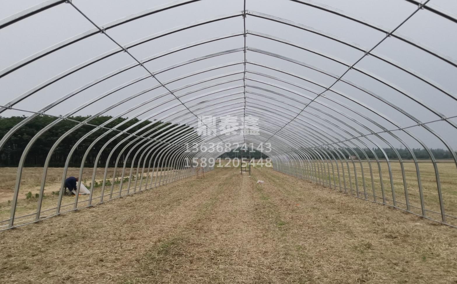 规模化的设施农业种植如何发展?